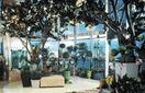 Оранжерея (Conservatory)
